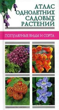 Перечень однолетних цветов с