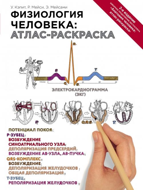 Книга анатомия и физиология человека федюкович скачать